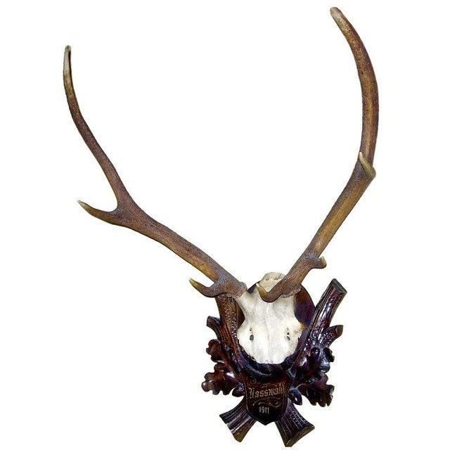 Early Deer Antler Mount on Black Forest Carved Wood Plaque For Sale - Image 4 of 4