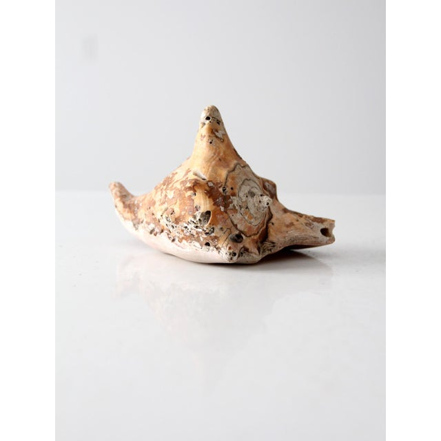 Vintage Natural Conch Shell For Sale - Image 4 of 7