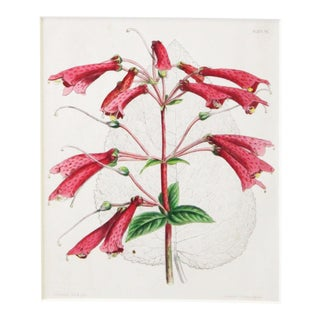 20th Century Realist Pink Botanical Print For Sale