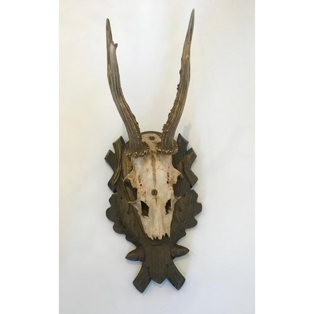 Black Forest Antlers Trophy With Leaf and Branch Decoration on Mount For Sale - Image 13 of 13