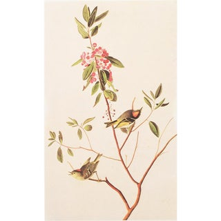 1966 Audubon Ruby-Crowned Wren Lithograph For Sale