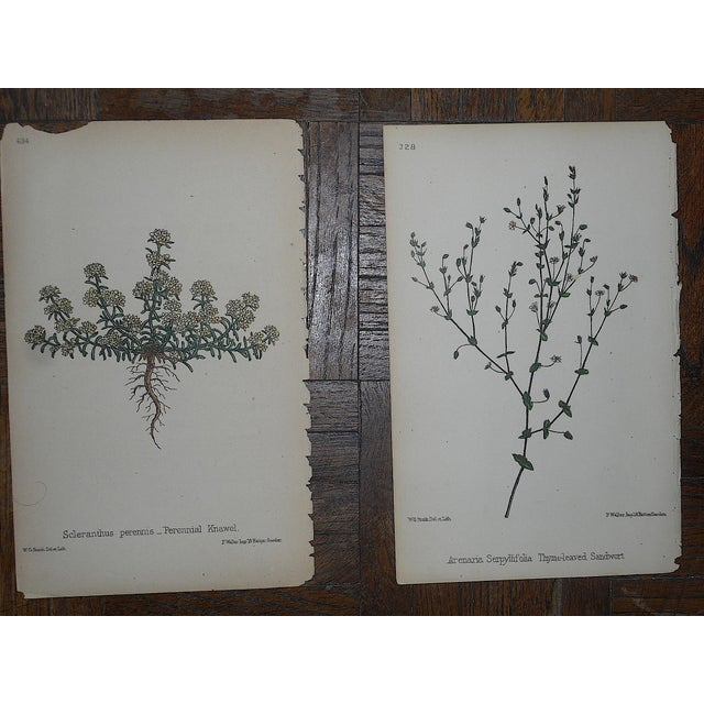 Late 19th Century Antique Botanical Lithographs - Set of 8 For Sale - Image 5 of 6