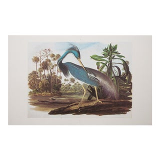 1960s Cottage Style Lithograph of a Louisiana Heron by John James Audubon