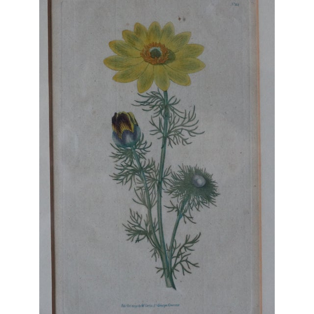 18th century English hand colored Curtic print