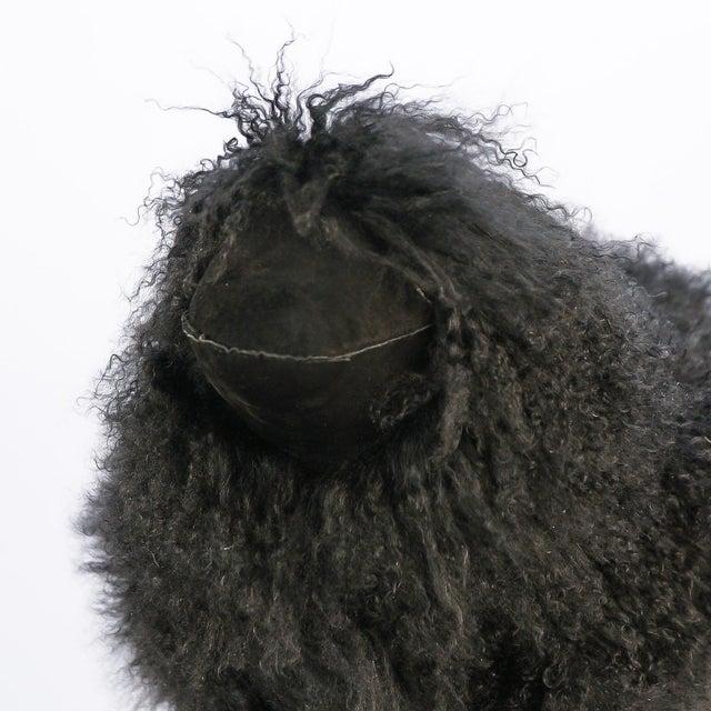 Large Black Tibetan Lamb Sheep For Sale - Image 4 of 8