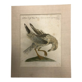 Hand Colored Bird Picture For Sale