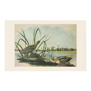 1966 American Snipe by Audubon, Vintage Cottage Style XL Print For Sale