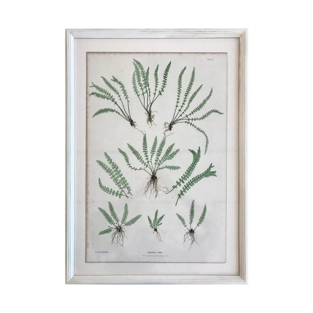 White 19th Century Bradbury & Evans Nature Printed Fern Print For Sale - Image 8 of 8