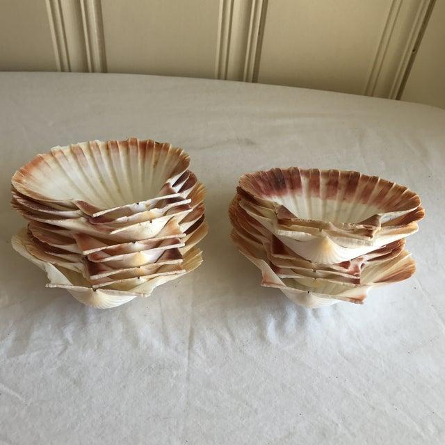 Natural Sea Shells - Set of 15 - Image 9 of 11