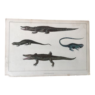 19th Century Goldsmith Crocodile / Lizard Engraving