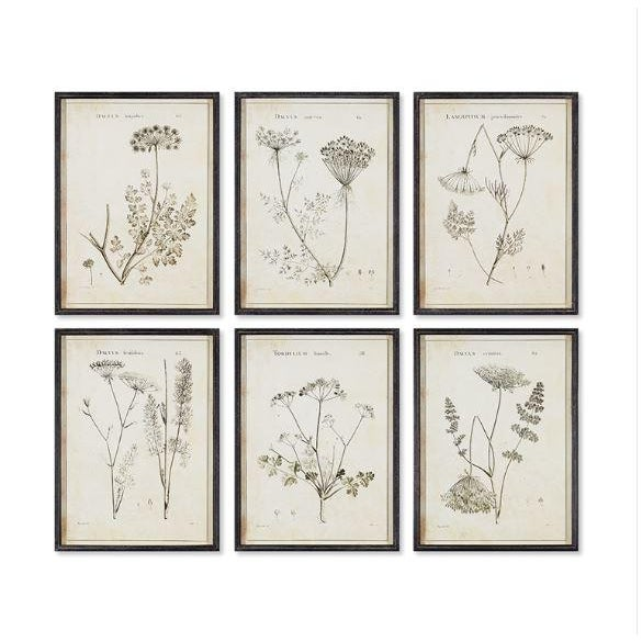 Wildflower Study Illustration Prints - Set of 6 For Sale - Image 4 of 4