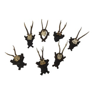 Black Forest Complementary Mounted Antlers - Set of 7 For Sale