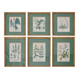 Antique 18th Century Botanical Prints Hand-Colored Engravings - a Set of 6 For Sale
