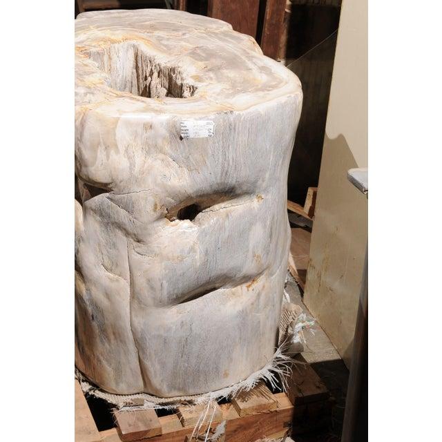Impressively Large Petrified Wood Table Base For Sale - Image 10 of 12