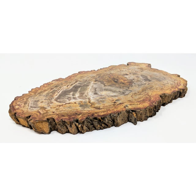 Arhaus Inspired Petrified Wood Tray For Sale In Providence - Image 6 of 10