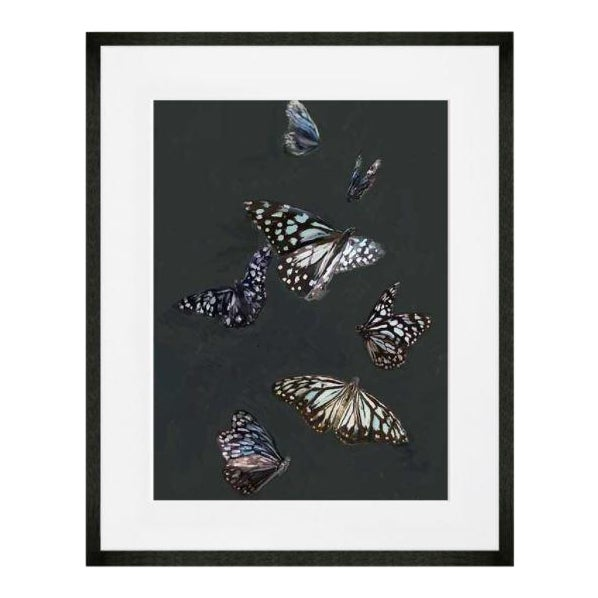 Blue Tiger Butterflies Art Print by Cathy Walters For Sale