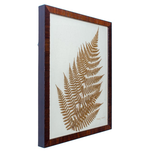 Offered is a pressed botanical of a tree fern. The botanical is framed in a handsome wood veneer frame. Sight 10 ¾ by 13 ¾...