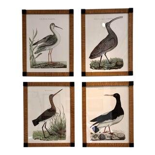 Nozeman Shore Birds in Custom Frames - Set of Four For Sale