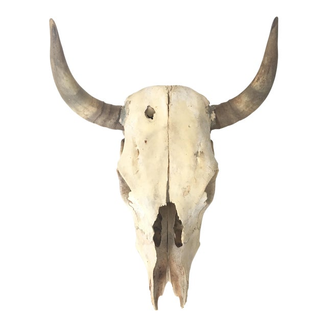 Steer Skull and Horns Wall Mount - Image 1 of 4