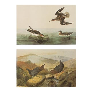 1966 Northern Phalarope & American Dipper by John James Audubon For Sale