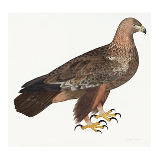 Golden Eagle Plate 05 by Olof Rudbeck (Cfa-Wd) For Sale