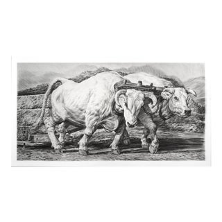 "Contemporary ""Oxen"" Rick Shaefer Charcoal Print For Sale"
