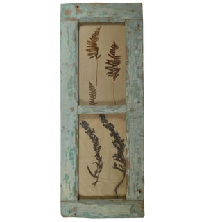 Herbiers Framed in Antique Window Frames For Sale