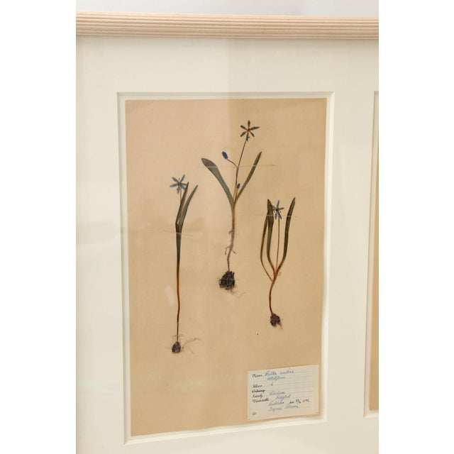 Framed Set of Four Herbaria For Sale - Image 4 of 13