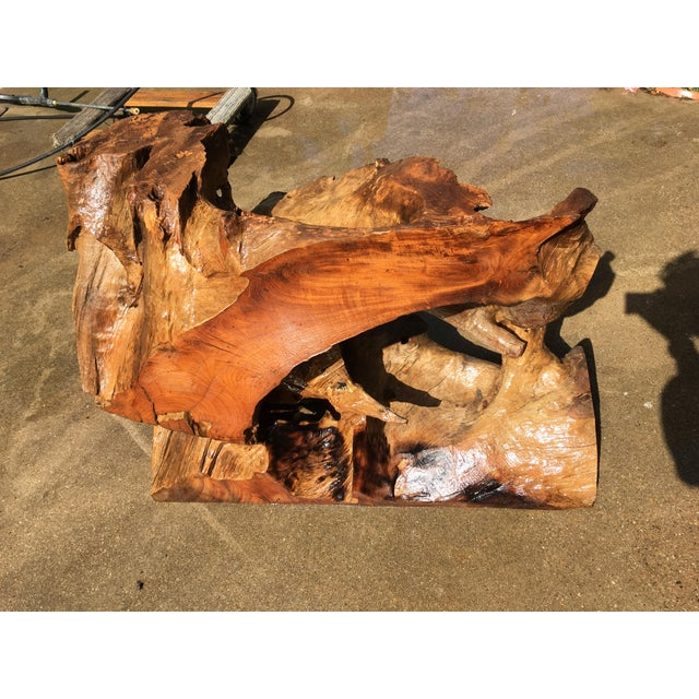 15th Century & Earlier Ancient Cypress Root Burl Coffee Table or Bar For Sale - Image 5 of 7