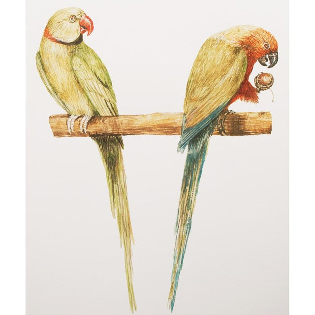 A beautiful reproduction print after watercolor of Alexandrine Parakeet and red-breasted Parakeet by Anselmus Boëtius de...