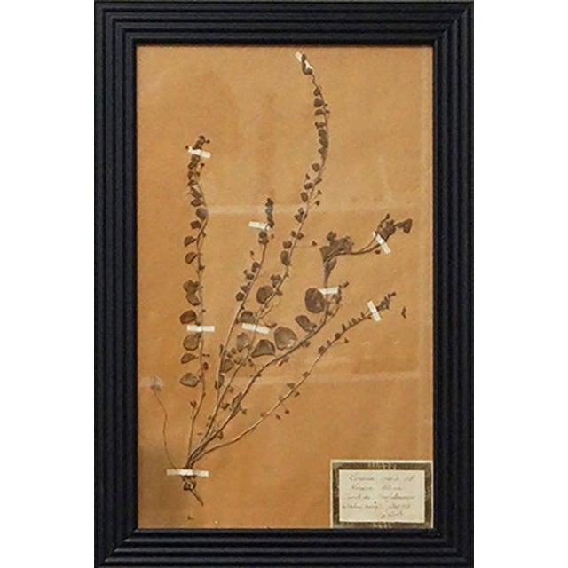 French Framed Botanicals - Set of 8 For Sale - Image 5 of 10
