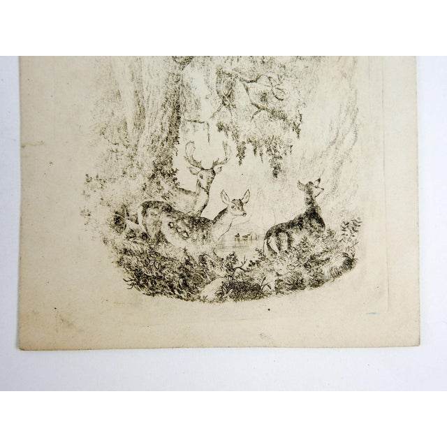 Primitive Tiny Deer in Forest Etching For Sale - Image 3 of 4