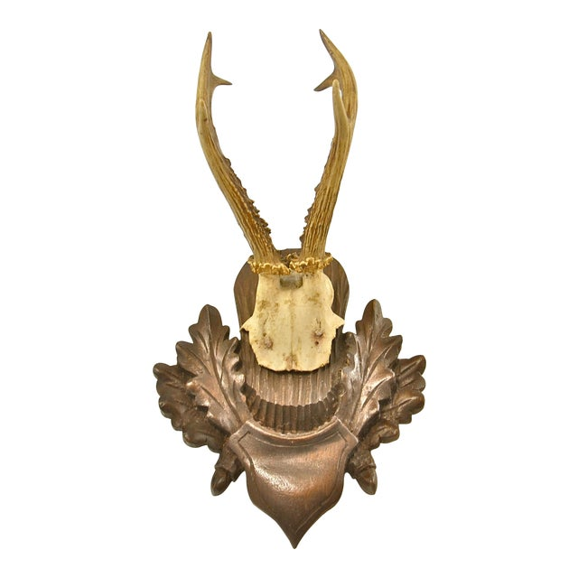 Mounted European Black Forest Roe Buck Antlers For Sale