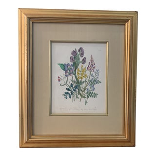 Framed Floral Botanical Print For Sale