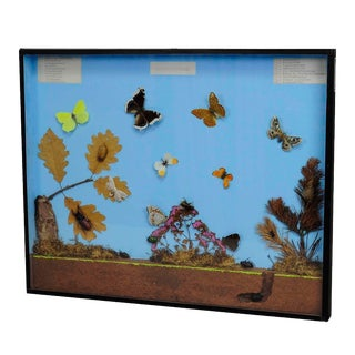 A Great Vintage School Teaching Display of the Insects of the Forest Edge For Sale
