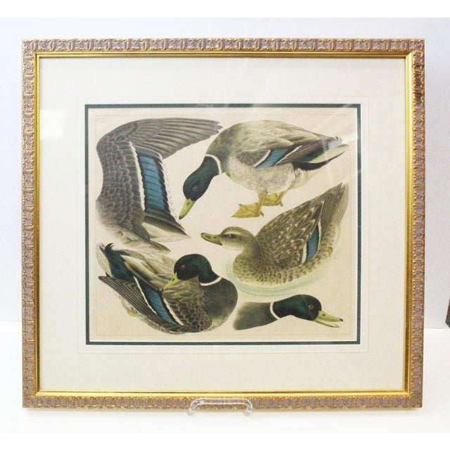 Glass Japanese Mallards Print in Gilt Frame For Sale - Image 7 of 7