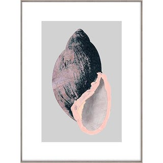 Victorian Shells 2 Art Print - Framed For Sale