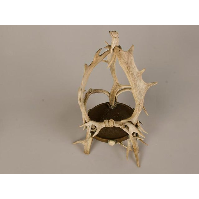 Circular Display Platform Enclosed with Hand Assembled Shed Antler Horn from Scotland c.1875 - Image 4 of 9