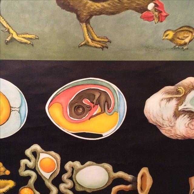 Jung-Koch-Quentell Chart Chicken - Image 9 of 11