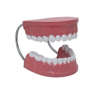 Mid-Century Dental School Bite Model For Sale