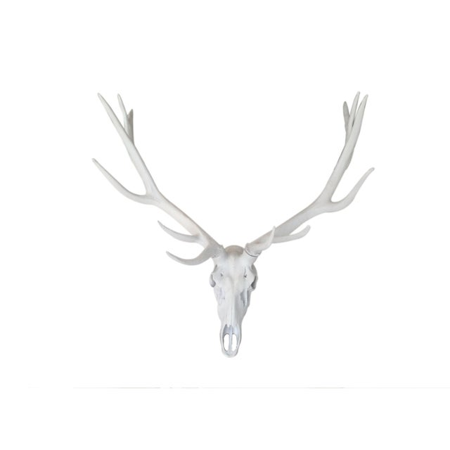 Resin Stag Skull Wall Decor, White For Sale - Image 4 of 6