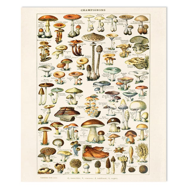 Adolphe Millot Illustrated Mushrooms Canvas Poster - Image 1 of 3
