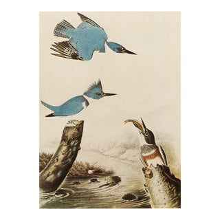Belted Kingfisher by John J. Audubon, Vintage Cottage Print For Sale