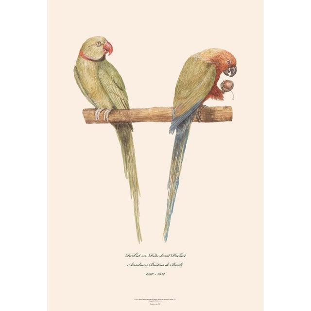 American Classical XL 1590s Contemporary Prints of Anselmus Boëtius De Boodt Parrots - Set of 6 For Sale - Image 3 of 9