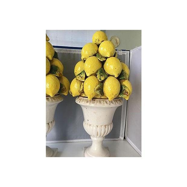 Italian Italian Lemon Topiaries - A Pair For Sale - Image 3 of 5