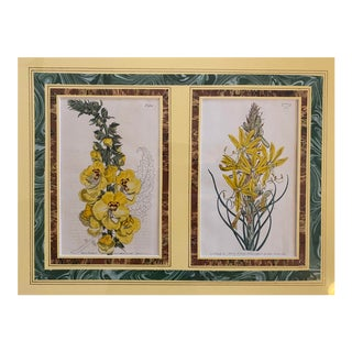 Early 19th Century English Hand Colored Botanical Floral/Flower Etchings by T. Curtis For Sale