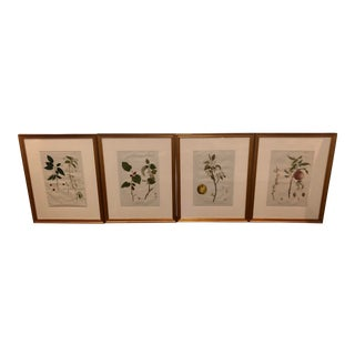 Rare Antique French Drawings by Genevieve De Nangis-Regnault - Set of 4 For Sale