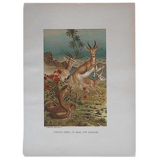 Antique Cobra & Gazelles Lithograph For Sale