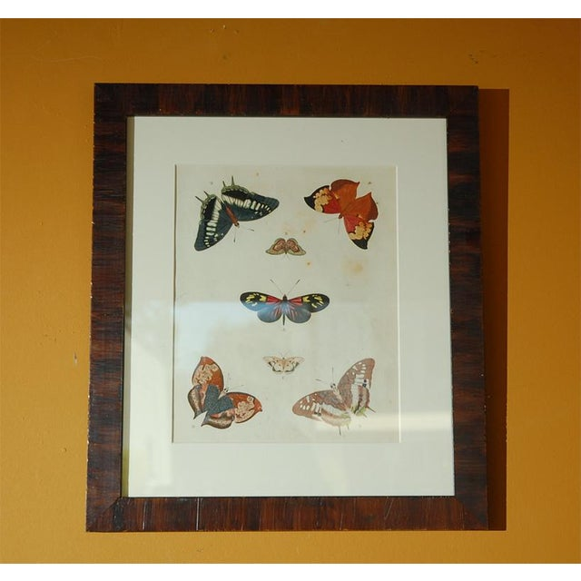 Early 18th Century Early 18th Century Antique Butterfly Prints - Set of 8 For Sale - Image 5 of 11