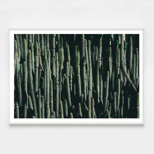 Contemporary Large Cactus Photograph in Cool Tones Unframed For Sale - Image 3 of 4